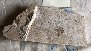 Fossil Fish 95
